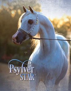 PSYLVER STAR VF-SC