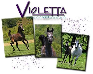 ViolettaDVD