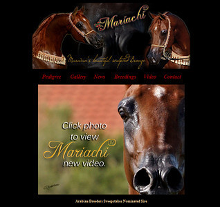 Art direction & facelift of an existing site built by previous web designer, current under SavannaH management. http://www.mariachifa.com