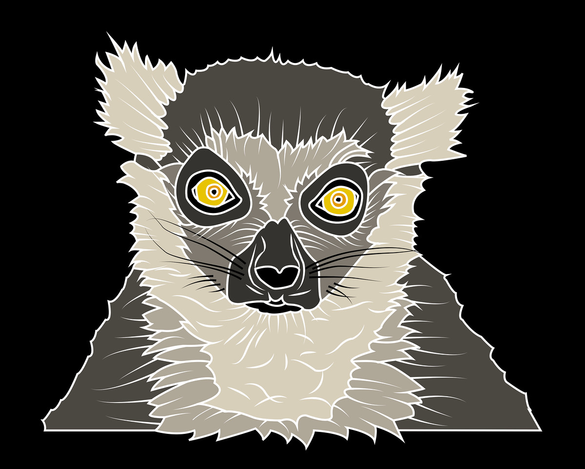 lemur4