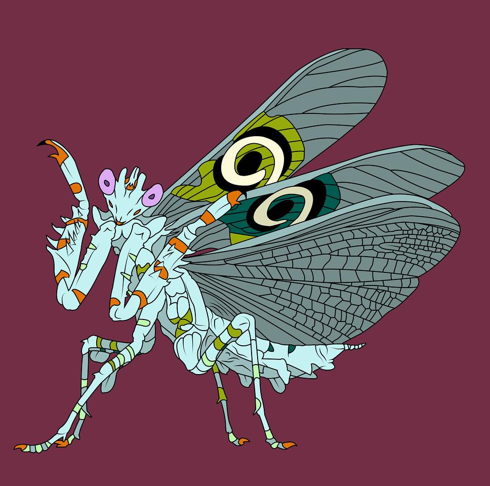 spinyflowermantis6