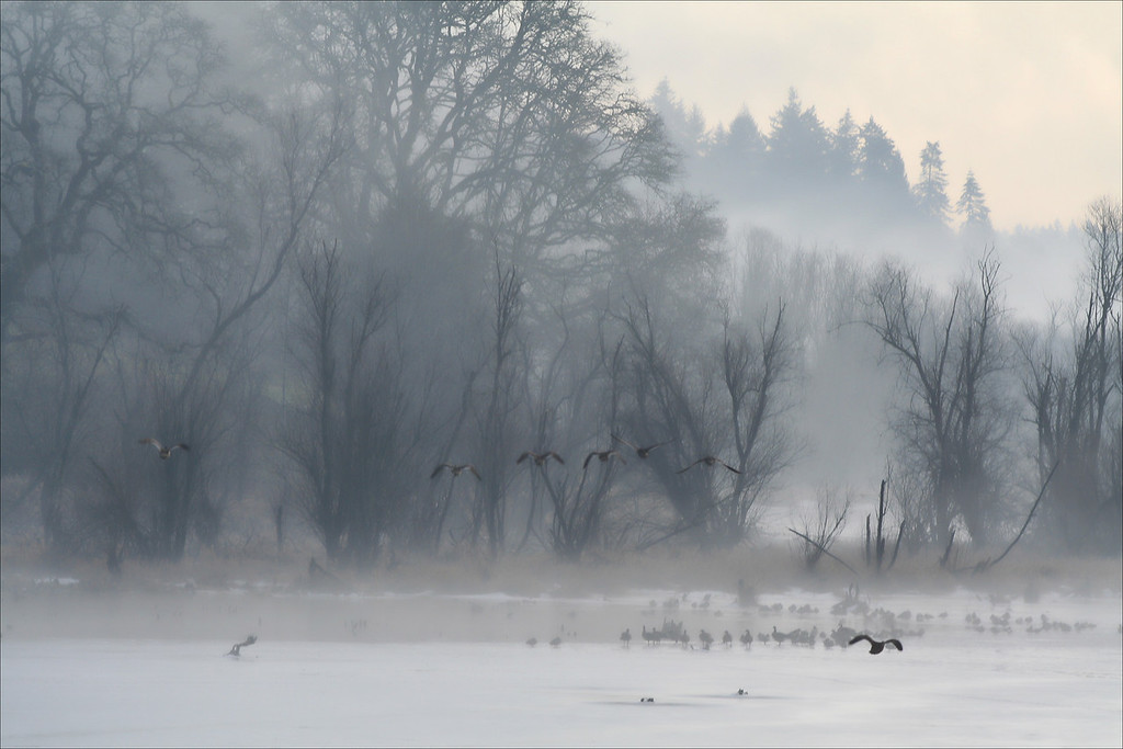Cold Winter Morning