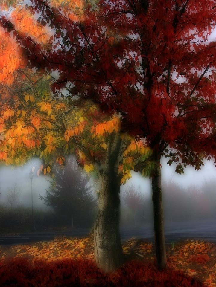 Fall Trees Orton