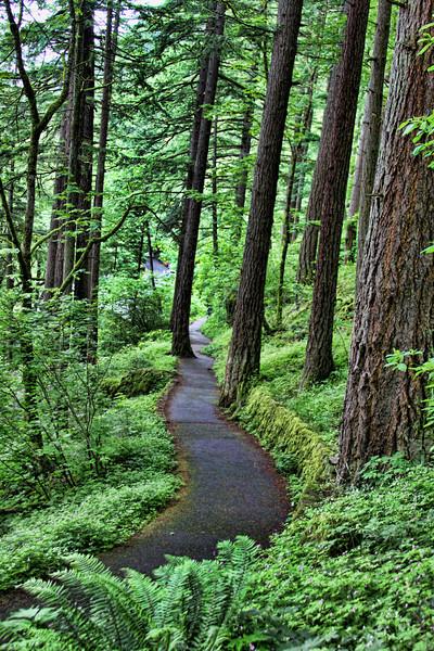 Waterfall Path
