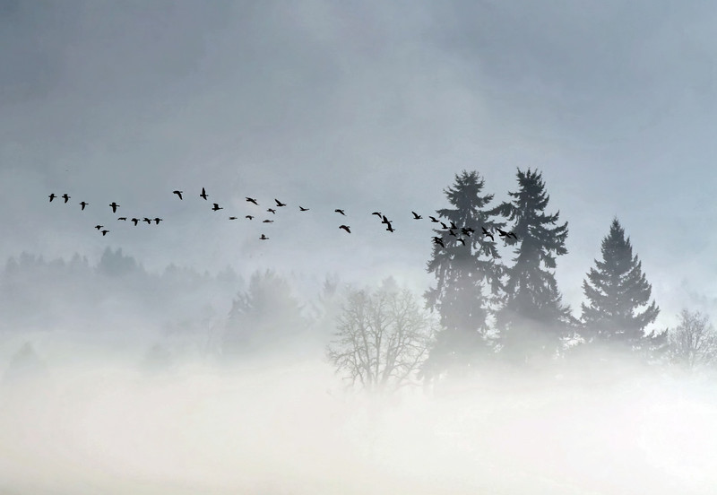 Birds above the Fog