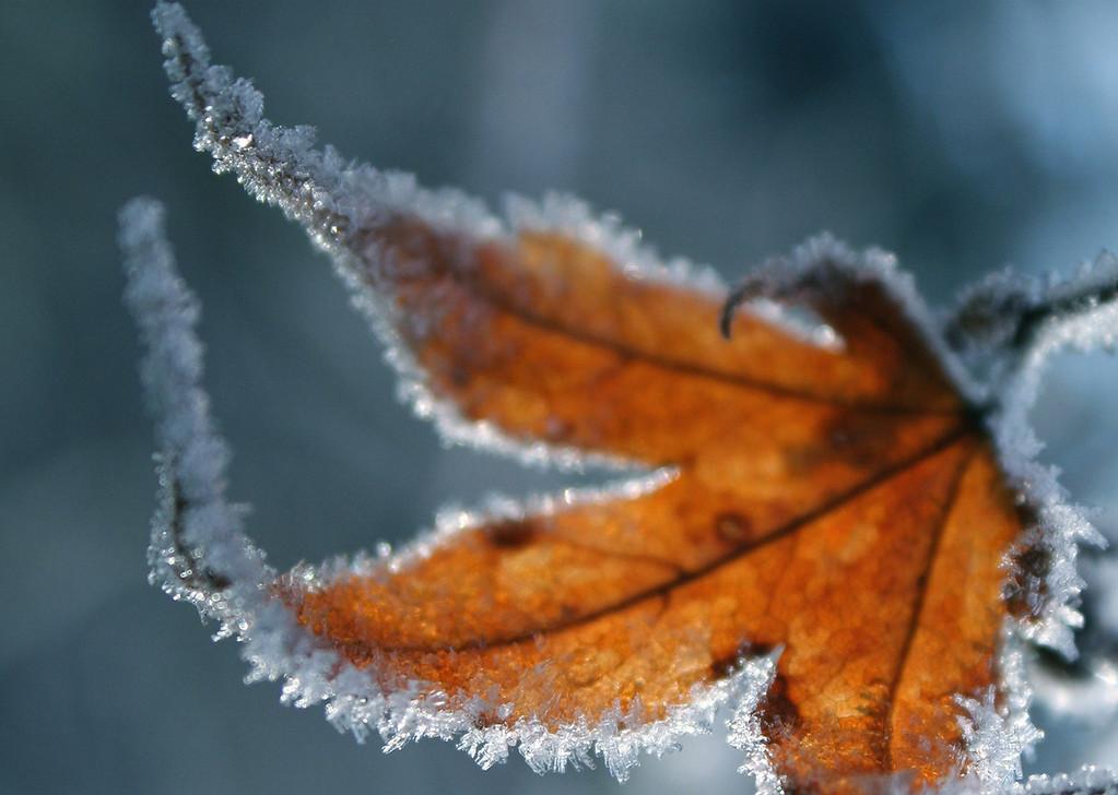 Fall Vs Winter