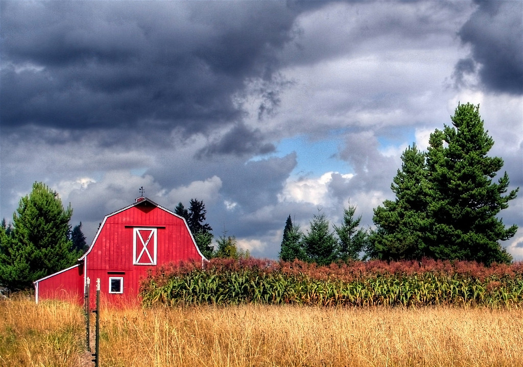 Red Barn with Corn