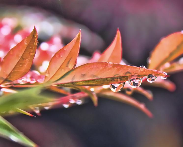 RaindropsFall11