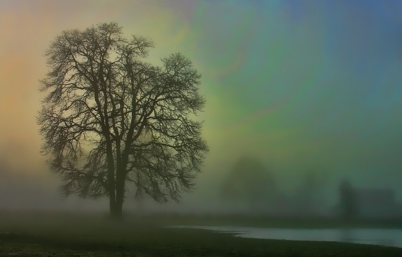 Tree in th fog