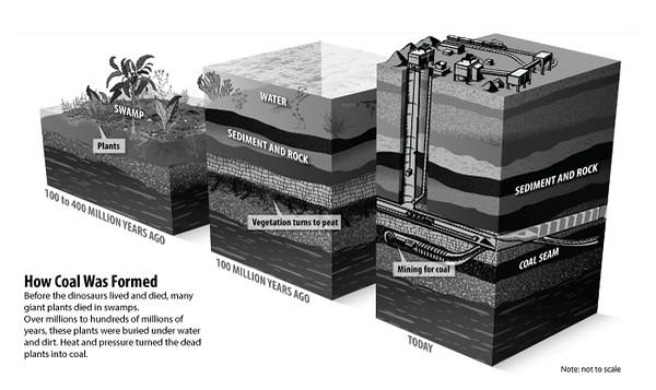 CoalFormationl