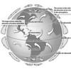 globalWindPatterns_Flatter