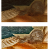 (Fig. 3) The top image is an original high resolution photo of the left side of Marie Anne Blanchet's face. The bottom enhanced image brings out details of a devilish creature in the center of the frame. The body of this creature is comprised of two amphibious animals.