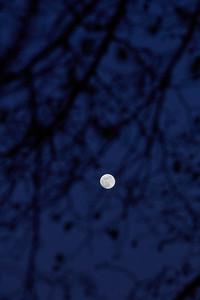 Arbre à Lune 2