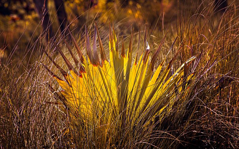 Grass-076.jpg
