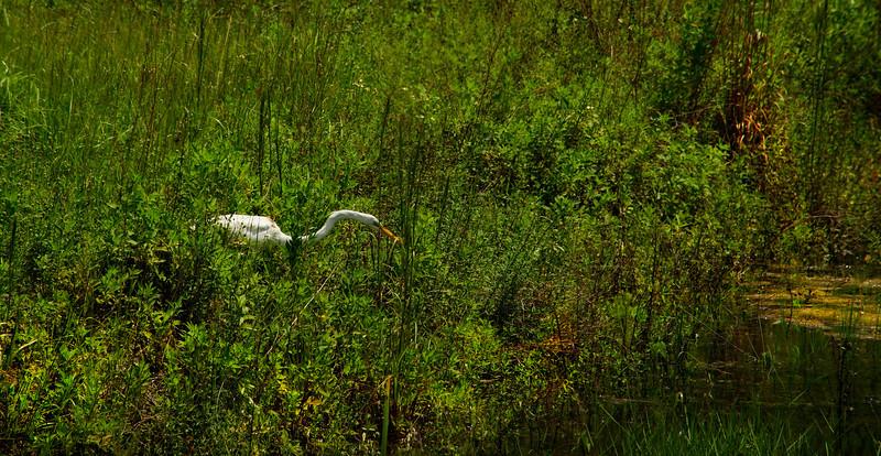 Grass-074.jpg
