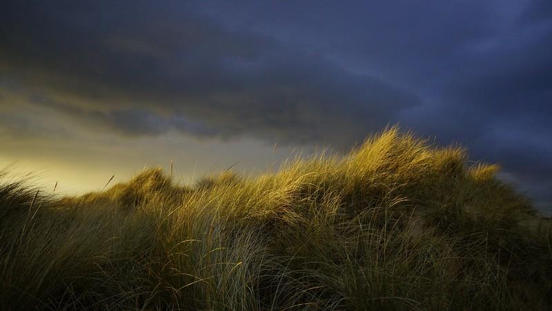 Grass-056.jpg