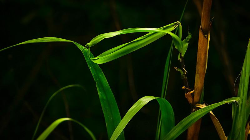 Grass-135.jpg