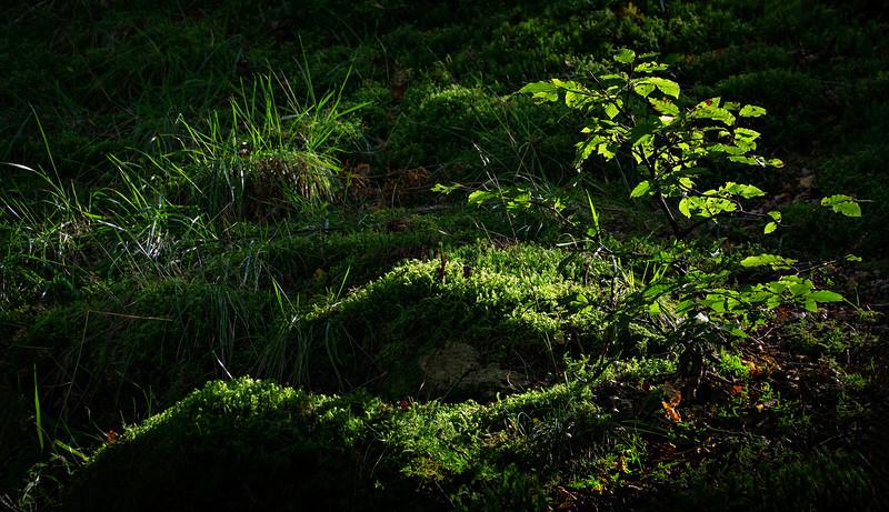 Grass-006.jpg