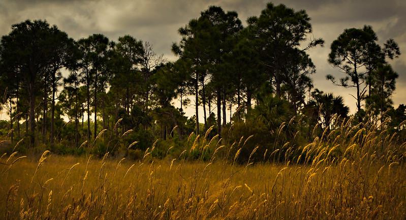 Grass-095.jpg