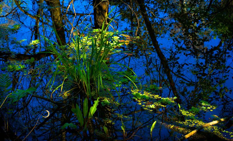 It's Never Just Grass-111.jpg