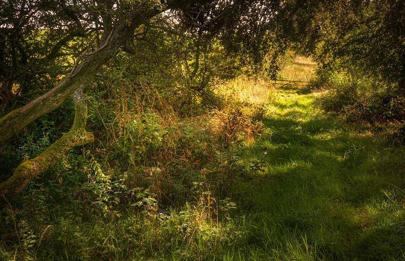 Grass-060.jpg