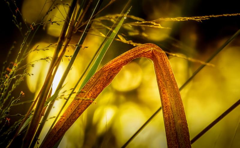 It's Never Just Grass-121.jpg