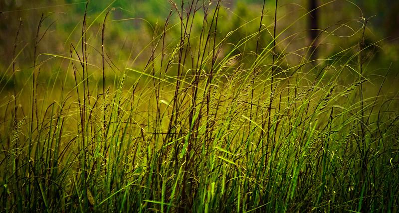 Grass-110.jpg