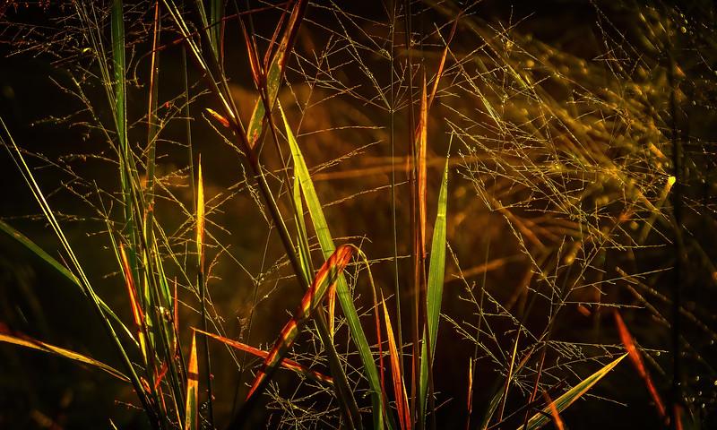 It's Never Just Grass-124.jpg