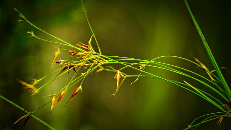 Grass-073.jpg