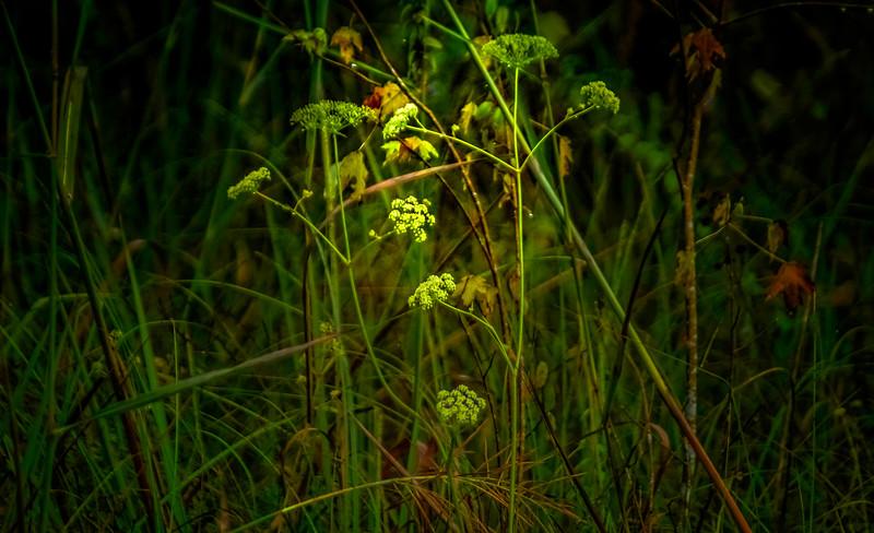 Grass-104.jpg