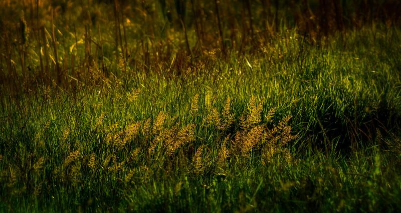 Grass-116.jpg