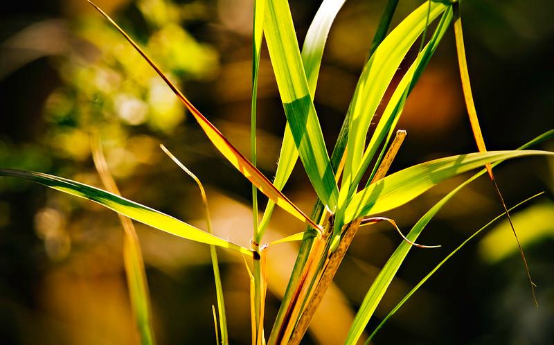 Grass-140.jpg