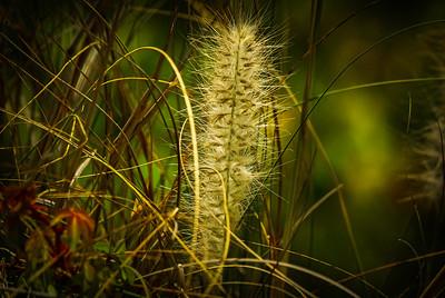 Just Grass.