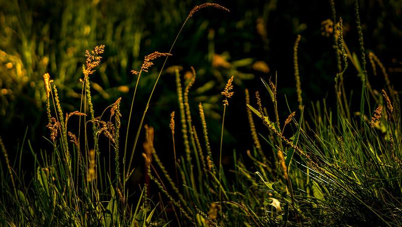 Grass-063.jpg