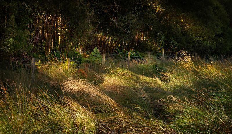 Grass-058.jpg