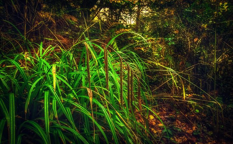 It's Never Just Grass-115.jpg