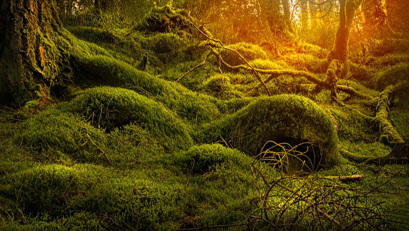 Grass-092.jpg