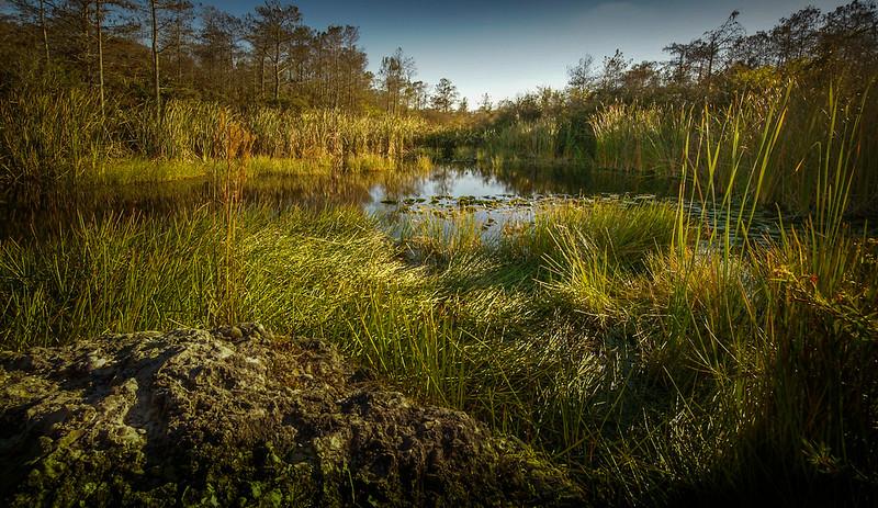 Grass-081.jpg
