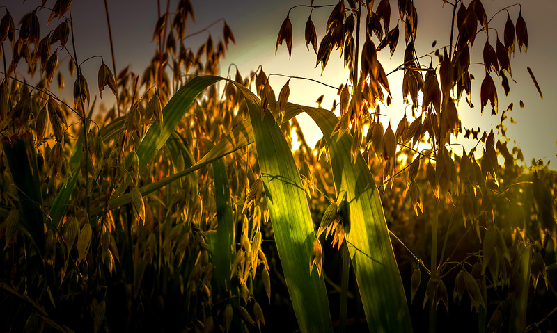 Grass-051.jpg