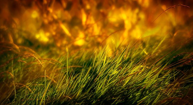 Grass-019.jpg