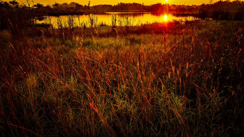 Grass-134.jpg