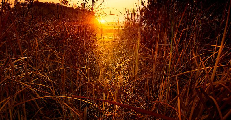 Grass-085.jpg