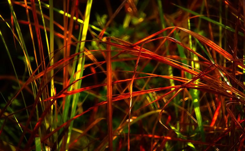 Grass-017.jpg