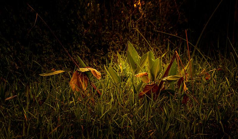 Grass-070.jpg
