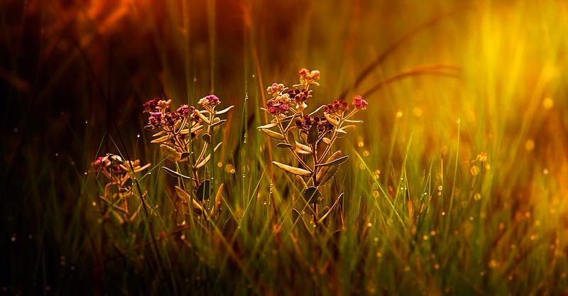 Grass-009.jpg