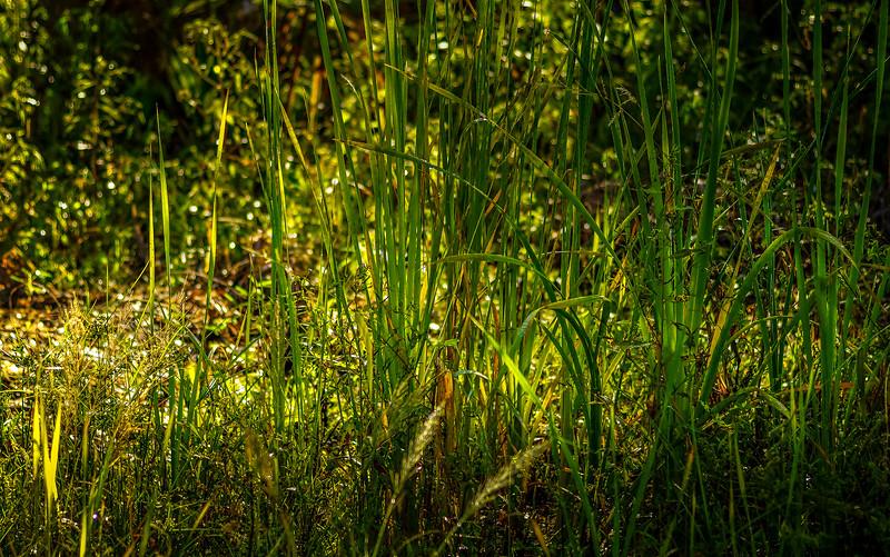 It's Never Just Grass-118.jpg