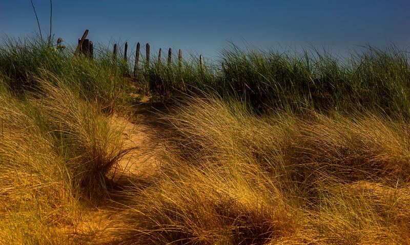 Grass-032.jpg