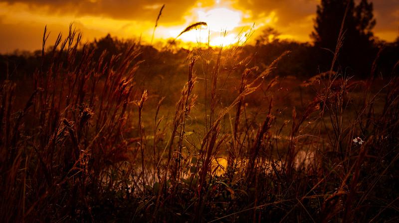 Grass-156.jpg
