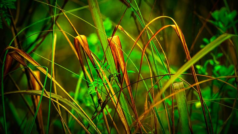 Grass-147.jpg