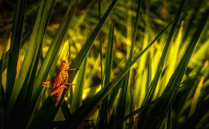 It's Never Just Grass-131.jpg
